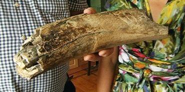 Рештки мамонта, якому 1 мільйон 13 тисяч років, знайшли на Коломийщині під час копання криниці. ВІДЕО