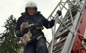 На Прикарпатті рятувальники зняли з дерева котика
