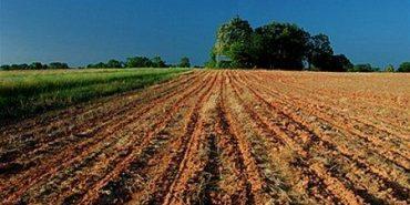 В Україні прогнозують зростання ціни на сільськогосподарські землі вдвічі