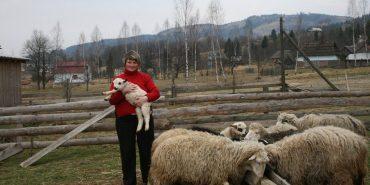 У Космачі два роки діє єдиний в Україні центр, де недуги лікують вівці. ФОТО