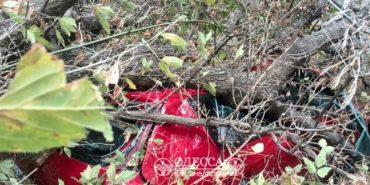 В Одесі сильний вітер валить дерева та будівельні крани, загинула жінка