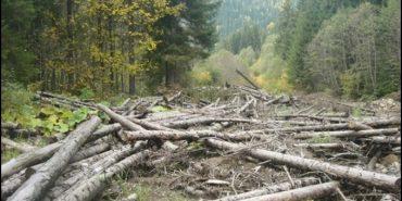 Громади чотирьох сіл Надвірнянщини вимагають в облради припинити незаконну вирубку лісу в Карпатах