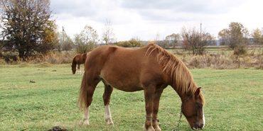 На Прикарпатті чоловік украв з пасовища коня і продав