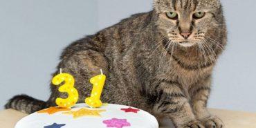 У 31 рік життя тільки починається: найстарший кіт світу має свій секрет довголіття. ФОТО