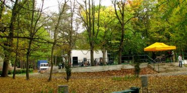 У Коломиї в міському парку на хлопця впала гілка: потерпілий в реанімації