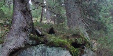 Захоплюючі фото втраченого заказника на Прикарпатті