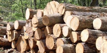 Деревообробники Прикарпаття організовують страйк