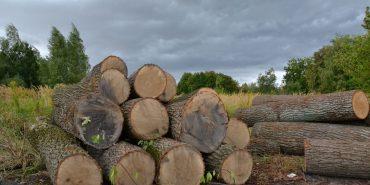 Через недбалість лісників на Надвірнянщині зрубано дерев на чотири мільйони гривень