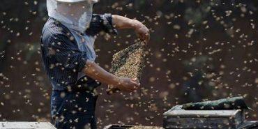 Машиніст, тістороб і бджоляр увійшли до 19 пріоритетних професій в Україні