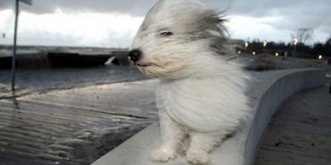 На Прикарпатті прогнозують посилення вітру