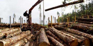 На Прикарпатті викрили підприємство, яке за підробленими документами експортувало понад 600 кубометрів лісу