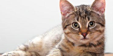 Роман Царук з Коломиї створив благодійний проект для допомоги тваринам з притулку