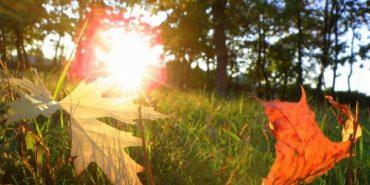 На початку наступного тижня синоптики обіцяють відчутне потепління