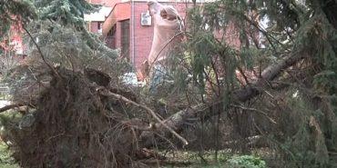 Через буревії на Прикарпатті стався деревопад. ФОТО+ВІДЕО