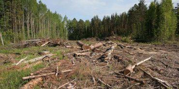 На Прикарпатті незаконно вирубали ліс вартістю понад 4 мільйони гривень