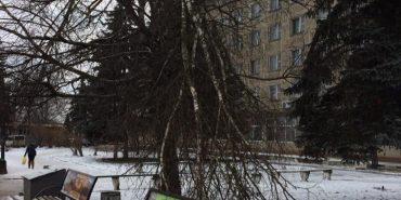 Вже місяць комунальники не можуть зрізати поламані під час снігопаду гілки на Грушевського. ФОТОФАКТ