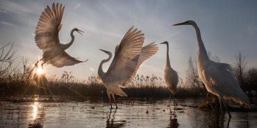 Найкращі фото дикої природи 2016 року показав National Geographic