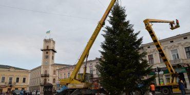 У Коломиї встановили головну ялинку міста, висотою 11 метрів. ФОТО