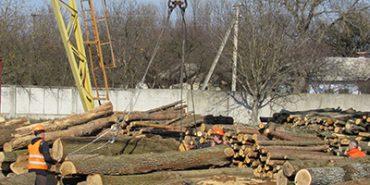 Надвірнянщина отримає майже 9 млн грн до бюджету за використання лісів