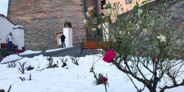 На Закарпатті зацвіли троянди посеред зими. ФОТОФАКТ