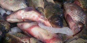 На Франківщині в супермаркеті продають хвору рибу. ФОТОФАКТ