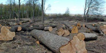 Облрада закликає парламент і президента розширити мораторій на експорт лісу