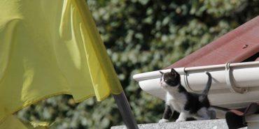 Бойові коти в зоні АТО 2016 року. ФОТО