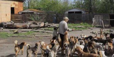 У Коломиї шукають працівника в притулок для тварин