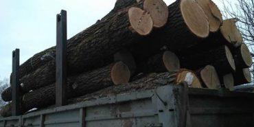 На Коломийщині затримали авто, яке перевозило незаконно зрубану деревину
