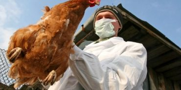 За 59 км від Коломиї зафіксували випадок пташиного грипу