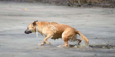 На Прикарпатті перехожий врятував собаку, що провалився під лід