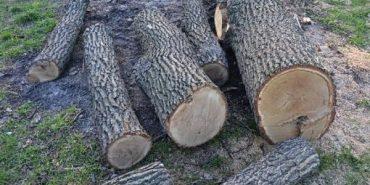 За зрубані на 38 тисяч гривень дуби мешканець Коломийщини заплатить 850 гривень штрафу