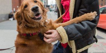 """Собака Лубі вчила команду """"сидіти"""", а навчилася — обіймати людей. ФОТО"""