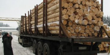 На Франківщині підприємець підробляв документи, за якими незаконно зрубану деревину вивозили за кордон