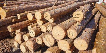 Майже половину деревини на Прикарпатті реалізовують за тіньовими схемами