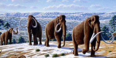 Гарвардські дослідники: за 2 роки мамонти ходитимуть по Землі