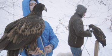 Прикарпатські ветеринари взяли під опіку червонокнижних птахів, конфіскованих у вуличних фотографів. ВІДЕО