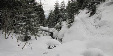 Карпати продовжує засипати снігом: випало вже понад 30 сантиметрів