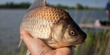 На Прикарпатті з 1 квітня заборонять промисловий та аматорський вилов риби