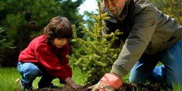 Цього року на Франківщині вже посадили 105 гектарів нових лісів