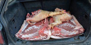 Фотофакт: в яких умовах в Коломиї перевозять м'ясо