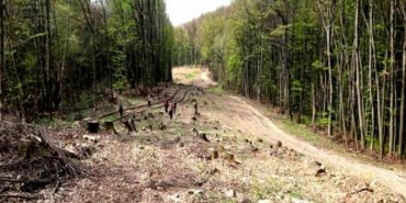 На посаду головного лісівника Прикарпаття претендують п'ять кандидатів