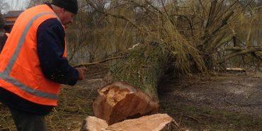 """На міському озері у Коломиї влада запланувала зрізати 107 дерев, бо """"вони аварійні"""". ФОТО"""