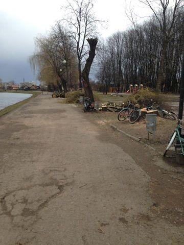 Коломияни скаржаться, що біля озера зрізали здорові дерева. ФОТОФАКТ