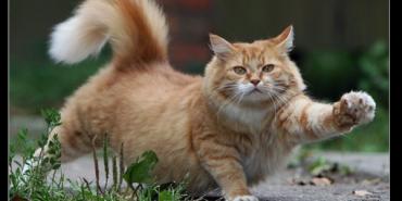 16 маловідомих фактів про котів