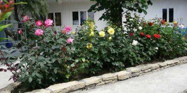 У Івано-Франківську пенсіонерку оштрафували на 700 гривень через квіти. ВІДЕО