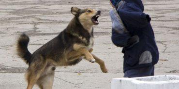 На Франківщині тварини покусали 11-ох людей