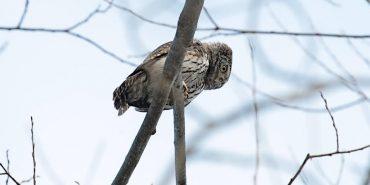 У Чорнобильській зоні побачили рідкісного птаха, якого занесено в Червону Книгу. ФОТО