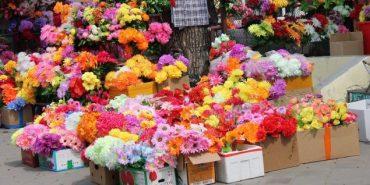 Прикарпатців закликають не нести штучні квіти на цвинтар