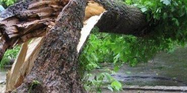 Наслідки негоди: на Франківщині на дорогу впало дерево і перегородило дорогу у селі